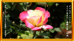 P170602rose_double_delight_0707